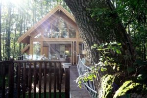 small-timber-frame-wooden-houses-building-designproductioneco-houses-LiskandasClevelymere-Tree-House-4
